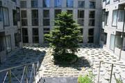 サンクンガーデン N's Court の中心的存在、サンクンガーデンに立つシンボルツリー。四季に応じて様々な姿を見せてくれます。